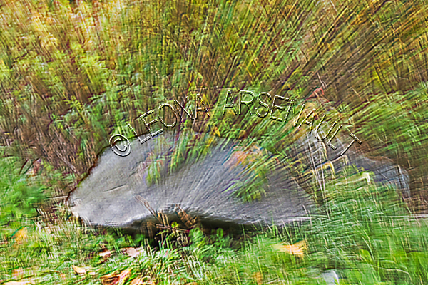 LENS_CREATION;ABSTRACT;TREE_STUMP;HORIZONTAL