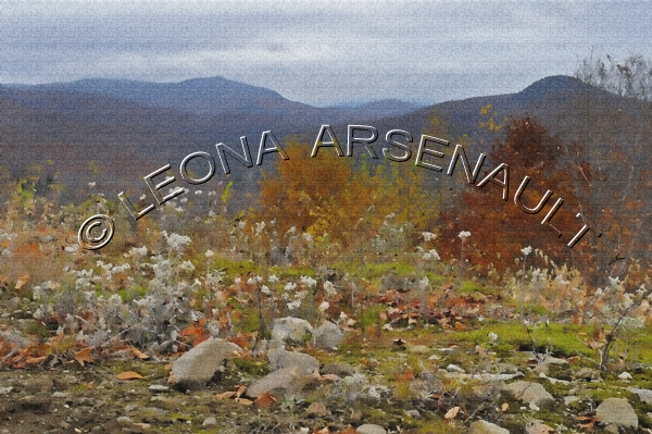 IMPRESSIONISTIC;VAL DES LACS;QUEBEC;CANADA;MOUNTAINS;FLOWERS;FALL;ROCKS;LENS CREATION;ABSTRACT;HORIZONTAL