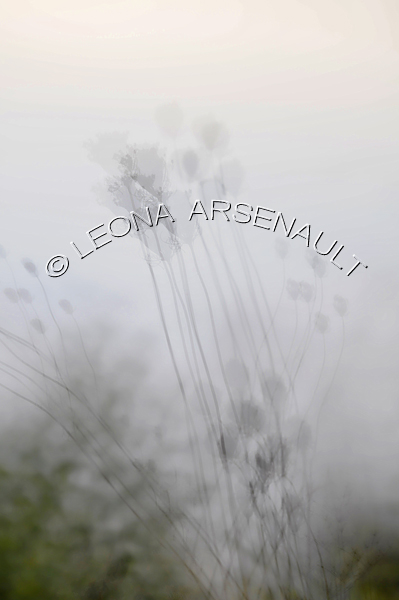 IMPRESSIONISTIC;LENS CREATIONS;ABSTRACT;WEEDS;VERTICAL