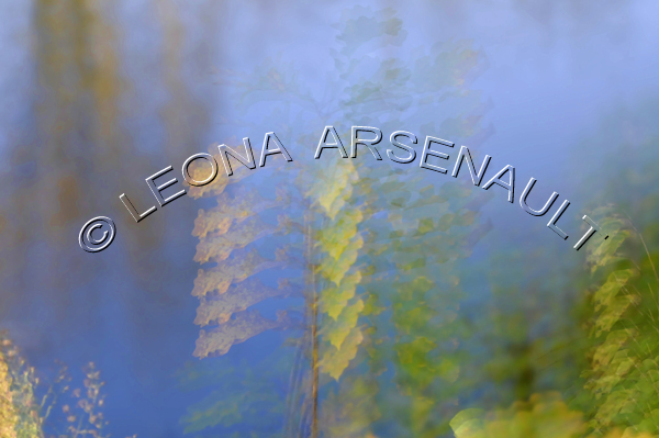IMPRESSIONISTIC;LENS CREATION;ABSTRACT;WATER;LEAVES;FALL;HORIZONTAL