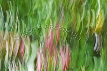 IMPRESSIONISTIC;LENS_CREATION;LEAVES;FALL;ABSTRACT;HORIZONTAL
