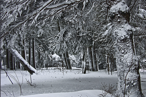 CANADA;PRINCE EDWARD ISLAND;PRINCE COUNTY;ABRAM-VILLAGE;FOREST;TREES;SNOW;WINTER;WINTERSCAPE;LANDSCAPE;BLACK AND WHITE;HORIZONTAL