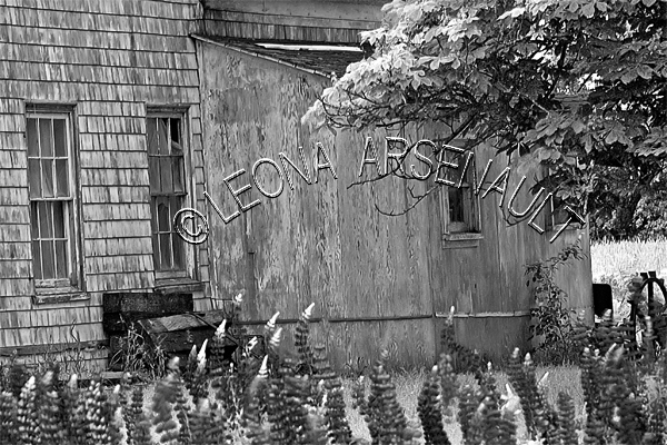 CANADA;PRINCE EDWARD ISLAND;KING'S COUNTY;OLD HOUSE;BUILDING;LUPINS;FLOWERS;BLACK AND WHITE;LANDSCAPE;SCENIC;HORIZONTAL;