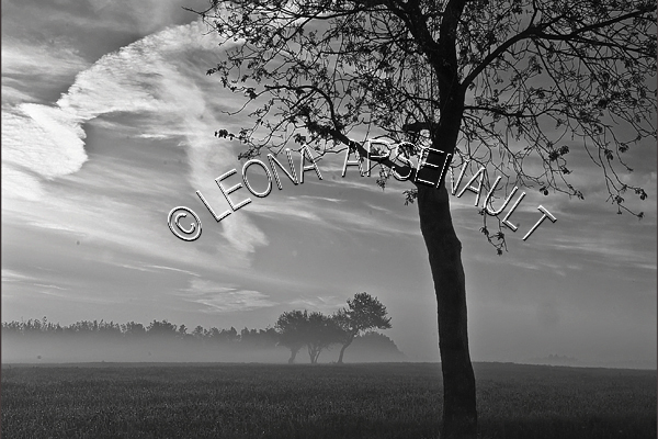 CANADA;PRINCE EDWARD ISLAND;PRINCE COUNTY;ABRAM-VILLAGE;FOG;TREES;BLACK AND WHITE;LANDSCAPE;SCENIC;HORIZONTAL;