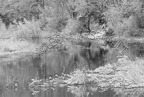 CANADA;PRINCE EDWARD ISLAND;PRINCE COUNTY;WELLINGTON;FROST;REFLECTIONS;TREES;WATER;FOREST;BLACK AND WHITE;LANDSCAPE;SCENIC;HORIZONTAL;