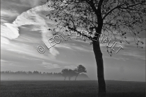 CANADA;PRINCE_EDWARD_ISLAND;PRINCE_COUNTY;ABRAM_VILLAGE;FOG;TREES;BLACK_AND_WHIT