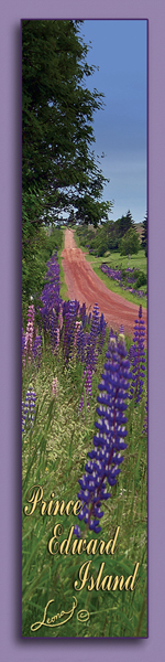 RED CLAY ROAD;LANE;LUPINS;FLOWERS;BOOKMARK;