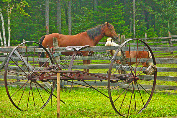 MAMMALS;LAND MAMMALS;HORSES;CROSS BRED HORSES;PONIES;PASTURES;FARM EQUIPMENT;HAY RAKES;HORIZONTAL
