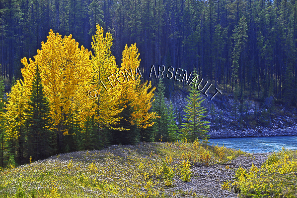 CANADA;ALBERTA;ICEFIELD PARKWAY;CANADIAN ROCKIES;ROCKY MOUNTAINS;WATER;FALL;FALL COLORS;WATERSCAPE;LANDSCAPE;SCENIC;HORIZONTAL;