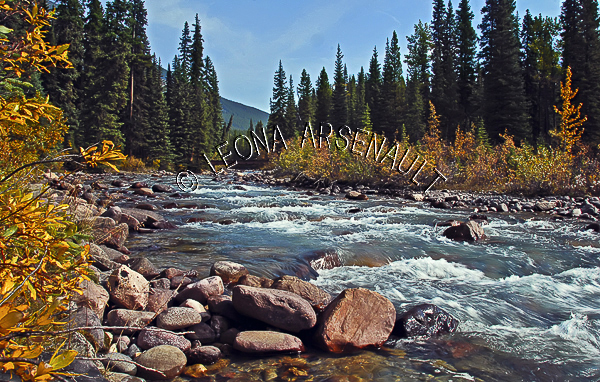 CANADA;ALBERTA;ICEFIELD PARKWAY;CANADIAN ROCKIES;ROCKY MOUNTAINS;WATER;FALL;STREAMS;WATERFALL;FALL COLORS;FLUID;FLOW;ROCKS;WATERSCAPE;LANDSCAPE;SCENIC;HORIZONTAL