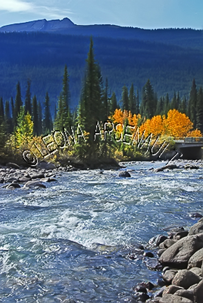 CANADA;ALBERTA;ICEFIELD PARKWAY;CANADIAN ROCKIES;ROCKY MOUNTAINS;WATER;FALL;FALL COLORS;STREAMS;FLUID;FLOW;WATERSCAPE;LANDSCAPE;SCENIC;VERTICAL
