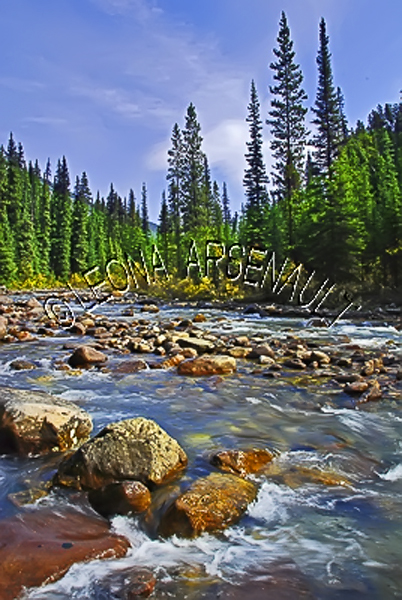 CANADA;ALBERTA;ICEFIELD PARKWAY;CANADIAN ROCKIES;ROCKY MOUNTAINS;WATER;STREAMS;CREEKS;FLOW;FLUID;ROCKS;WATERFALL;FALL;WATERSCAPE;LANDSCAPE;SCENIC;VERTICAL