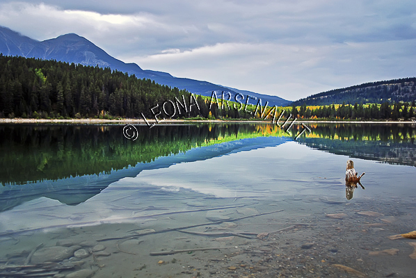 CANADA;ALBERTA;JASPER NATIONAL PARK;PATRICIA LAKE;LAKE;WATER;FALL;REFLECTIONS;WATERSCAPE;LANDSCAPE;SCENIC;HORIZONTAL