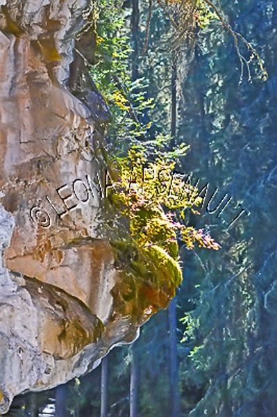 CANADA;ALBERTA;BANFF NATIONAL PARK;JOHNSTON CANYON;ROCKS;CLIFF;LIMESTONE;VERTICAL