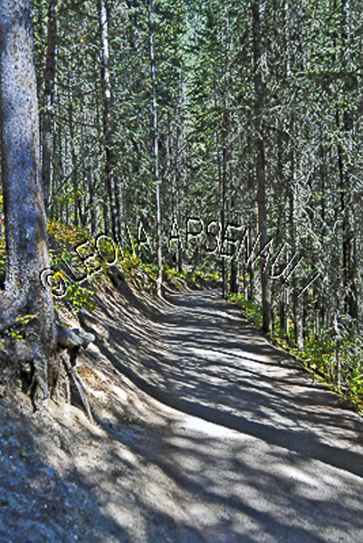 CANADA;ALBERTA;BANFF NATIONAL PARK;JOHNSTON CANYON;ROCKS;PATH;FOREST;TREES;LANDSCAPE;SCENIC;VERTICAL