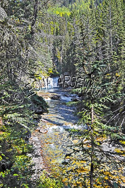 CANADA;ALBERTA;BANFF NATIONAL PARK;JOHNSTON CANYON;ROCKS;WATER;FLOW;FLUID;STREAM;FOREST;TREES;LIMESTONE;WATERSCAPE;VERTICAL