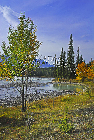 CANADA;ALBERTA;ICEFIELD PARKWAY;CANADIAN ROCKIES;ROCKY MOUNTAINS;WATER;FALL;FALL COLORS;WATERSCAPE;LANDSCAPE;SCENIC;VERTICAL;