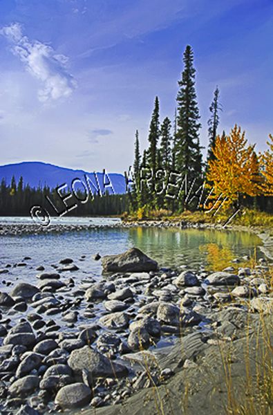 CANADA;ALBERTA;ICEFIELD PARKWAY;CANADIAN ROCKIES;ROCKY MOUNTAINS;WATER;ROCKS;FALL;FALL COLORS;REFLECTIONS;WATERSCAPE;LANDSCAPE;SCENIC;VERTICAL;