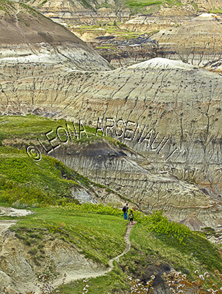CANADA;ALBERTA;DRUMHELLER VALLEY;HORSESHOE CANYON;LANDSCAPE;SCENIC;VERTICAL