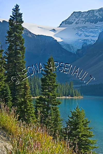 CANADA;ALBERTA;ICEFIELD PARKWAY;CANADIAN ROCKIES;ROCKY MOUNTAINS;WATER;FALL;WATERSCAPE;LANDSCAPE;SCENIC;VERTICAL
