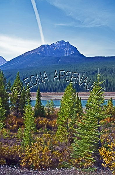 CANADA;ALBERTA;ICEFIELD PARKWAY;CANADIAN ROCKIES;ROCKY MOUNTAINS;WATER;FALL;LANDSCAPE;SCENIC;VERTICAL
