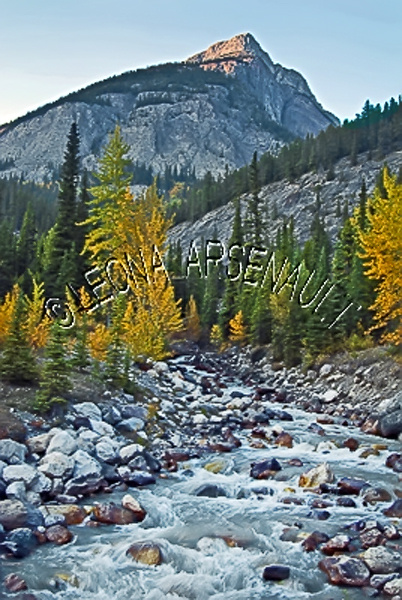 CANADA;ALBERTA;ICEFIELD PARKWAY;CANADIAN ROCKIES;ROCKY MOUNTAINS;WATER;STREAMS;CREEKS;WATERFALL;FLUID;ROCKS;FALL;FALL COLORS;WATERSCAPE;LANDSCAPE;SCENIC;VERTICAL