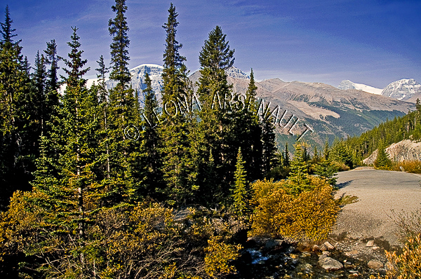 CANADA;ALBERTA;ICEFIELD PARKWAY;CANADIAN ROCKIES;ROCKY MOUNTAINS;FALL;LANDSCAPE;SCENIC;HORIZONTAL