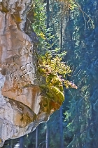 CANADA;ALBERTA;BANFF_NATIONAL_PARK;JOHNSTON_CANYON;ROCKS;CLIFF;LIMESTONE;VERTICA