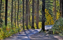 CANADA;ALBERTA;BANFF_NATIONAL_PARK;JOHNSTON_CANYON;ROCKS;FOREST;TREES;PATH;LANDS
