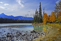 CANADA;ALBERTA;ICEFIELD_PARKWAY;CANADIAN_ROCKIES;ROCKY_MOUNTAINS;WATER;ROCKS;FAL