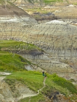 CANADA;ALBERTA;DRUMHELLER_VALLEY;HORSESHOE_CANYON;LANDSCAPE;SCENIC;VERTICAL