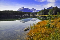 CANADA;ALBERTA;ICEFIELD_PARKWAY;CANADIAN_ROCKIES;ROCKY_MOUNTAINS;WATER;FALL;REFL