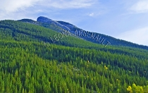 CANADA;ALBERTA;ICEFIELD_PARKWAY;CANADIAN_ROCKIES;ROCKY_MOUNTAINS;FALL;MOUNTAINS;