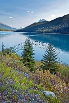 CANADA;ALBERTA;ICEFIELD_PARKWAY;CANADIAN_ROCKIES;ROCKY_MOUNTAINS;WATER;FALL;WATE