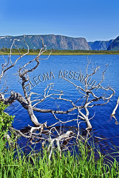 CANADA;NEWFOUNDLAND;GROS MORNE NATIONAL PARK;WATER;MOUNTAINS;FJORDS;TREES;SUMMER;WATERSCAPE;SCENIC;VERTICAL