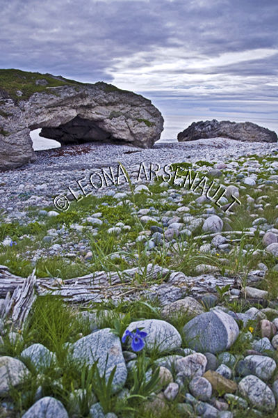 CANADA;NEWFOUNDLAND;ARCHES PROVINCIAL PARK;THE ARCHES;ROCK FORMATION;ROCKS;VIKING TRAIL;WILD FLOWERS;WATER;GULF OF ST LAWRENCE;LANDSCAPE;SCENIC;VERTICAL