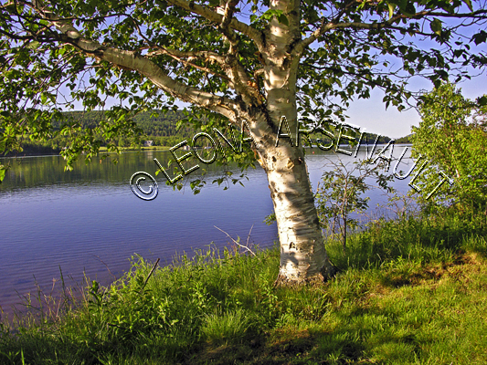 CANADA;NOVA SCOTIA;BADDECK;CAPE BRETON ISLAND;CABBOT TRAIL; COASTAL;TREES;WATER;BRAS D'OR LAKE;SUMMER;WATERSCAPE;LANDSCAPE;SCENIC;HORIZONTAL;