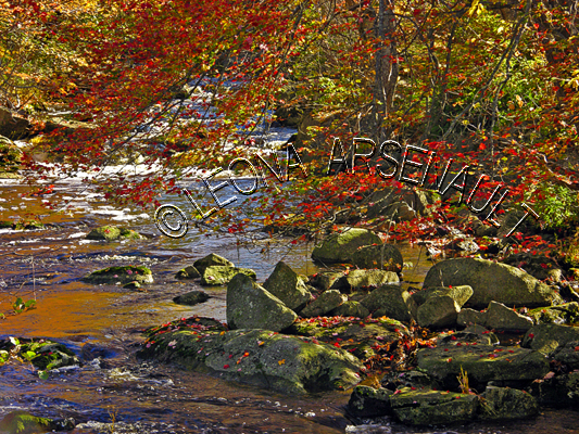 CANADA;NOVA SCOTIA;ST MARGARET'S BAY;FALL;FALL COLORS;ROCKS;STREAMS;WATER;ST MARGARET'S BAY;WATERSCAPE;LANDSCAPE;SCENIC;HORIZONTAL;