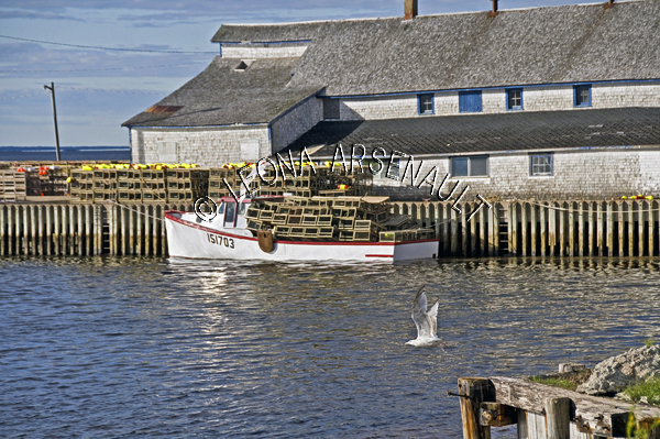 CANADA;PRINCE EDWARD ISLAND;PRINCE COUNTY;ABRAM-VILLAGE;FISHING BOATS;BUOYS;BOATS;LOBSTER TRAPS;TRAPS;;NAUTICAL;SEAGULLS;BIRDS;BUILDINGS;WATER;SUMMER;SEASCAPE;SCENIC;HORIZONTAL