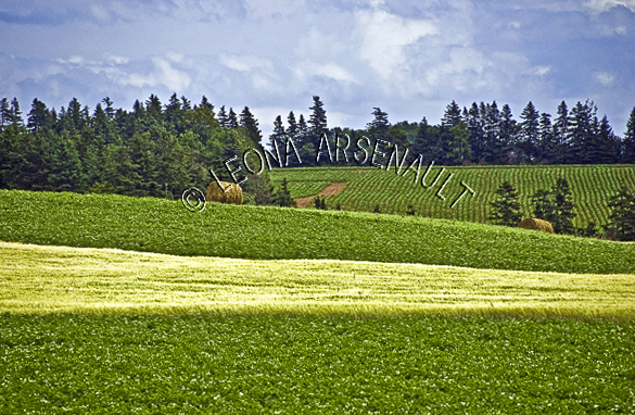CANADA;PRINCE EDWARD ISLAND;QUEEN'S COUNTY;POTATO FIELDS;PASTURES;GRAIN FIELDS;FIELDS;CROPS;AGRICULTURE;HAY BALES;ROLLING HILLS;SUMMER;LANDSCAPE;SCENIC;HORIZONTAL;
