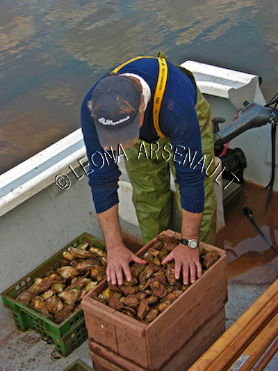 CANADA;PRINCE EDWARD ISLAND;PRINCE COUNTY;ABRAM-VILLAGE;OYSTER FISHERMAN;FISHERMAN;OYSTER;FISHING;SHELL FISH;SUMMER;NAUTICAL;SEASCAPE;VERTICAL