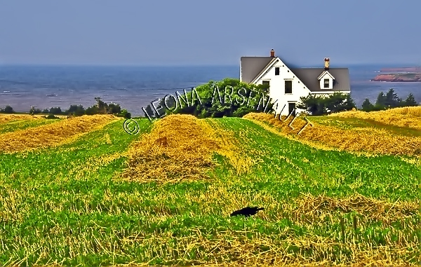 CANADA;PRINCE EDWARD ISLAND;QUEEN'S COUNTY;DESABLE;HAY FIELD;FIELD;HOUSE;BUILDING;FARMING;AGRICULTURE;LANDSCAPE;SCENIC;HORIZONTAL