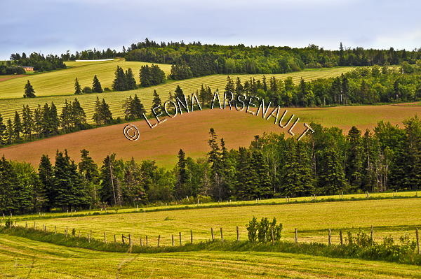 CANADA;PRINCE EDWARD ISLAND;QUEEN'S COUNTY;SOUTH GRANVILLE;HAY  FIELD;GRAIN FIELD;FIELD;FARMING;AGRICULTURE;SPRING;LANDSCAPE;SCENIC;HORIZONTAL
