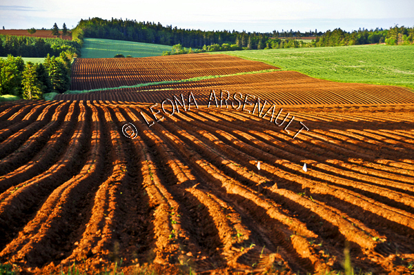 CANADA;PRINCE EDWARD ISLAND;QUEEN'S COUNTY;NEW LONDON;POTATO FIELD;FIELD;FARMING;AGRICULTURE;SPRING;LANDSCAPE;SCENIC;HORIZONTAL