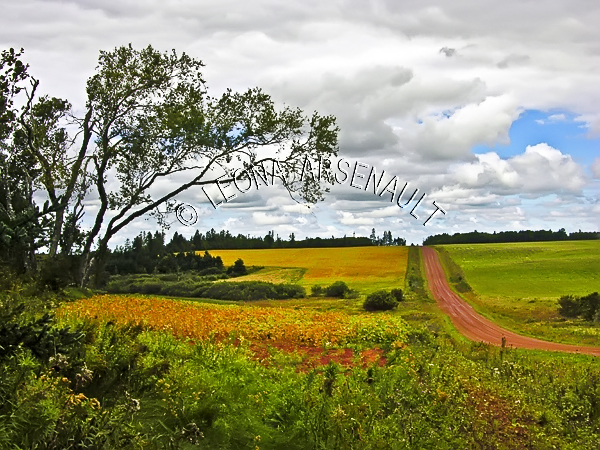 CANADA;PRINCE EDWARD ISLAND;QUEEN'S COUNTY;VERNON RIVER;SOYBEAN FIELD;FIELD;RED CLAY ROAD;FARMING;AGRICULTURE;LANDSCAPE;SCENIC;HORIZONTAL