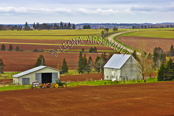 CANADA;PRINCE EDWARD ISLAND;QUEEN'S COUNTY;SUMMERFIELD;GRAIN FIELDS;FIELDS;PASTURES;HIGHWAY;AGRICULTURE;FARMING;SUMMER;LANDSCAPE;SCENIC;HORIZONTAL