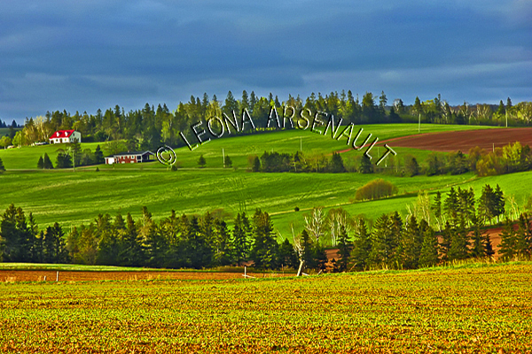CANADA;PRINCE EDWARD ISLAND;QUEEN'S COUNTY;DESABLE;GRAIN FIELDS;FIELDS;PASTURES;FARMING;AGRICULTURE;SPRING;LANDSCAPE;SCENIC;HORIZONTAL