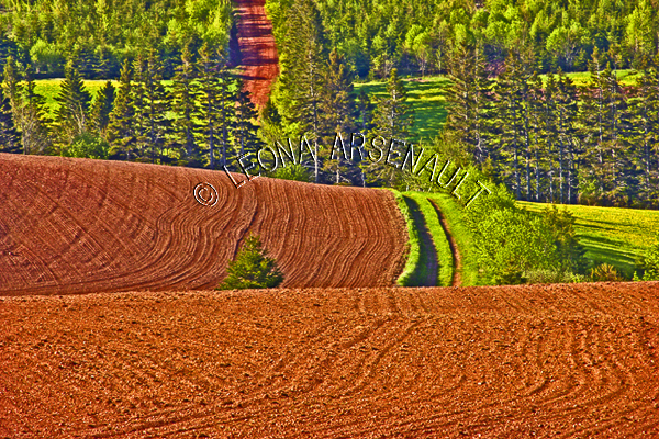 CANADA;PRINCE EDWARD ISLAND;QUEEN'S COUNTY;HUNTER RIVER;ROLLING HILLS;HILLS;RED SOIL;FARMING;SPRING;GRAIN FIELDS;FIELDS;AGRICULTURE;CLAY ROAD;PATH;LANDSCAPE;SCENIC;HORIZONTAL