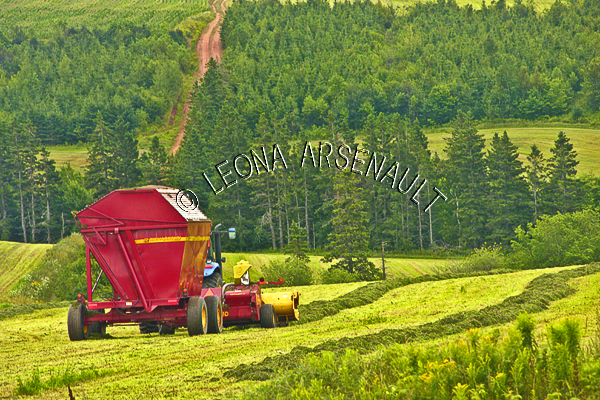 CANADA;PRINCE EDWARD ISLAND;QUEEN'S COUNTY;PLEASANT VALLEY;ROLLING HILLS;HILLS;FARMING;HARVESTING;SUMMER;SILAGE FIELDS;FIELDS;FARMING EQUIPMENT;AGRICULTURE;CLAY ROAD;PATH;LANDSCAPE;SCENIC;HORIZONTAL