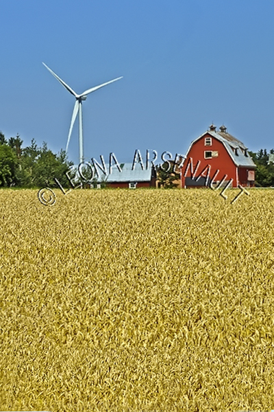 CANADA;PRINCE EDWARD ISLAND; PRINCE SUMMERSIDE;FARMING;FIELDS;BARNS;BUILDINGS;;WINDMILLS;ENERGY;FALL;LANDSCAPE;VERTICAL
